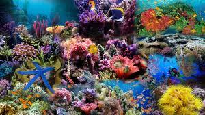 DESCOPERA SI CRESTI! – Recifele de corali